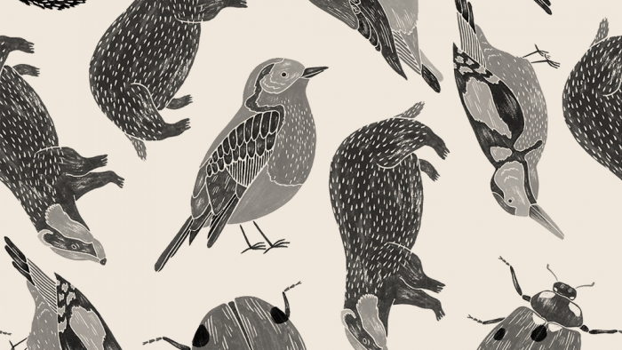 Illustrations of different British wildlife.