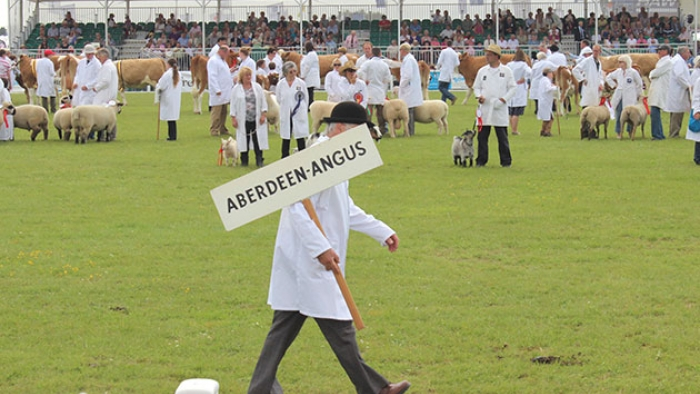 A man carrying a sign reading 'Aberdeen Angus' in front of a sheep-shearing competition.