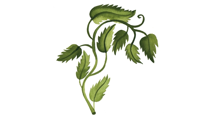 An illustration of a vine.